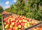 appels pluk 2